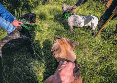 three dogs ready to hunt